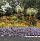 Λουλούδια που ανθίζουν σε έναν κήπο στοκ εικόνα με δικαίωμα ελεύθερης χρήσης