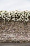 Λουλούδια που αυξάνονται πέρα από τον αρχαίο ιρλανδικό τοίχο πετρών Στοκ φωτογραφία με δικαίωμα ελεύθερης χρήσης
