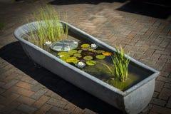 Λουλούδια που επιπλέουν στο νερό στο λουτρό στον κήπο πολυτέλειας Στοκ Εικόνες