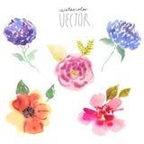 Λουλούδια που τίθενται watercolor Στοκ φωτογραφίες με δικαίωμα ελεύθερης χρήσης