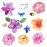 Λουλούδια που τίθενται watercolor Στοκ φωτογραφία με δικαίωμα ελεύθερης χρήσης