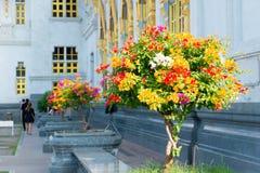 Λουλούδια που τακτοποιούνται Στοκ φωτογραφίες με δικαίωμα ελεύθερης χρήσης