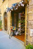 Λουλούδια ποδηλάτων στοκ εικόνες με δικαίωμα ελεύθερης χρήσης
