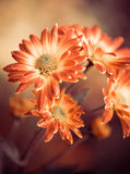 Λουλούδια πτώσης Στοκ φωτογραφία με δικαίωμα ελεύθερης χρήσης