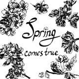 Λουλούδια πλαισίων της απεικόνισης σκίτσων μήλων απεικόνιση αποθεμάτων