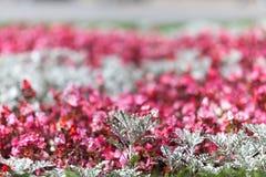 Λουλούδια σε έναν κήπο μια ηλιόλουστη ημέρα Στοκ εικόνα με δικαίωμα ελεύθερης χρήσης