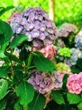 Λουλούδια σε έναν κήπο Στοκ εικόνα με δικαίωμα ελεύθερης χρήσης