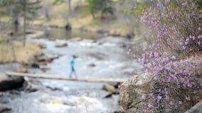Λουλούδια σε έναν ποταμό και το κύλισμα βουνών φιλμ μικρού μήκους