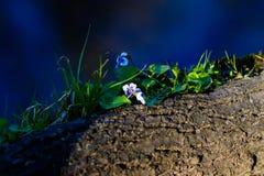 Λουλούδια σε ένα διασπασμένο κούτσουρο στοκ φωτογραφία με δικαίωμα ελεύθερης χρήσης