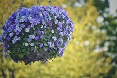 Λουλούδια σε ένα καλάθι Στοκ Φωτογραφίες