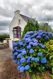 Λουλούδια σε ένα μικρό χωριό, Βρετάνη, Γαλλία Στοκ εικόνες με δικαίωμα ελεύθερης χρήσης