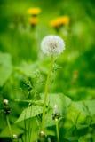 Λουλούδια σε ένα πράσινο λιβάδι Στοκ Εικόνες