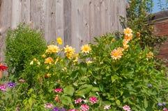 Λουλούδια σε ένα υπόβαθρο του ξύλινου φράκτη Στοκ Εικόνες