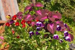 Λουλούδια σε ένα υπόβαθρο του ξύλινου φράκτη Στοκ φωτογραφία με δικαίωμα ελεύθερης χρήσης