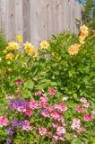 Λουλούδια σε ένα υπόβαθρο του ξύλινου φράκτη Στοκ Φωτογραφία
