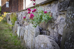 Λουλούδια σε ένα churyard Στοκ Εικόνες