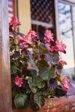 Λουλούδια σε μια οδό Στοκ Φωτογραφίες