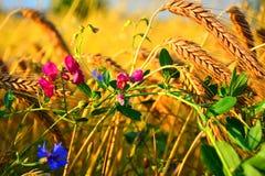 Λουλούδια σε μια συγκομιδή πολύχρωμη Στοκ Εικόνες