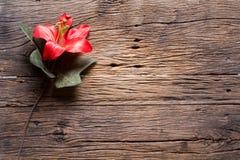 Λουλούδια σε ξύλινο Στοκ Εικόνες