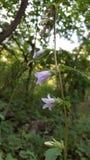 Λουλούδια σε Pyrinees, όμορφο Στοκ Εικόνες