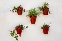 Λουλούδια στα δοχεία Plaza de Los Naranjos Στοκ φωτογραφία με δικαίωμα ελεύθερης χρήσης