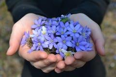 Λουλούδια στα χέρια Στοκ Εικόνα