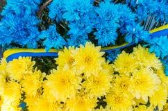 Λουλούδια στα χρώματα της σημαίας της Ουκρανίας Μπλε και κίτρινα λωρίδες Στοκ Εικόνες