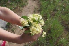 Λουλούδια στα όπλα παιδιών όπως παρόντα Στοκ φωτογραφία με δικαίωμα ελεύθερης χρήσης