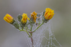 Λουλούδια στην ανατολή Στοκ Φωτογραφίες