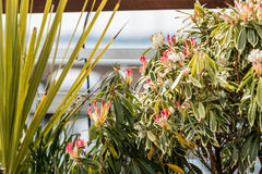 Λουλούδια στην αποβάθρα Στοκ φωτογραφίες με δικαίωμα ελεύθερης χρήσης
