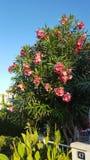 Λουλούδια στην Ισπανία Στοκ Φωτογραφία