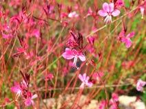 Λουλούδια στην Ισπανία Στοκ Φωτογραφίες