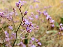 Λουλούδια στην Κριμαία Στοκ Φωτογραφία
