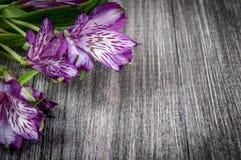 Λουλούδια στην ξύλινη ανασκόπηση Ελεύθερου χώρου για το κείμενο, κινηματογράφηση σε πρώτο πλάνο Στοκ φωτογραφίες με δικαίωμα ελεύθερης χρήσης