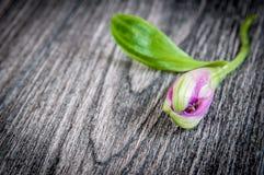 Λουλούδια στην ξύλινη ανασκόπηση Ελεύθερου χώρου για το κείμενο, κινηματογράφηση σε πρώτο πλάνο Στοκ εικόνες με δικαίωμα ελεύθερης χρήσης
