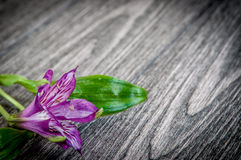 Λουλούδια στην ξύλινη ανασκόπηση Ελεύθερου χώρου για το κείμενο, κινηματογράφηση σε πρώτο πλάνο Στοκ Φωτογραφία