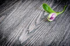 Λουλούδια στην ξύλινη ανασκόπηση Ελεύθερου χώρου για το κείμενο, κινηματογράφηση σε πρώτο πλάνο Στοκ φωτογραφία με δικαίωμα ελεύθερης χρήσης