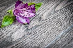 Λουλούδια στην ξύλινη ανασκόπηση Ελεύθερου χώρου για το κείμενο, κινηματογράφηση σε πρώτο πλάνο Στοκ Εικόνα