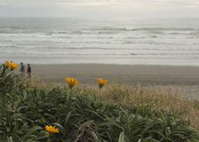 Λουλούδια στην παραλία Στοκ φωτογραφία με δικαίωμα ελεύθερης χρήσης