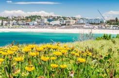Λουλούδια στην παραλία Bondi, Σίδνεϊ - Αυστραλία Στοκ Εικόνες