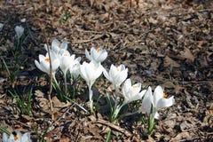 Λουλούδια στην πλήρη άνθιση την άνοιξη Στοκ εικόνα με δικαίωμα ελεύθερης χρήσης