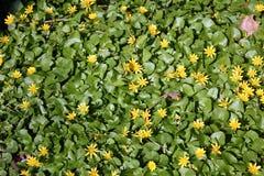 Λουλούδια στην πλήρη άνθιση την άνοιξη Στοκ Φωτογραφίες