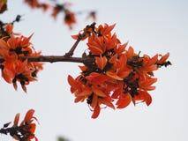 Λουλούδια στην Ταϊλάνδη στοκ φωτογραφίες