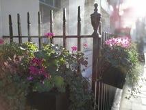 Λουλούδια στην υδρονέφωση πρωινού Στοκ εικόνα με δικαίωμα ελεύθερης χρήσης