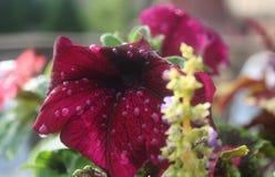 Λουλούδια στη βροχή Στοκ Φωτογραφία