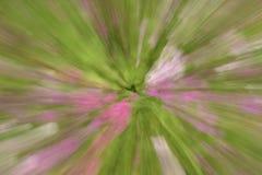 Λουλούδια στη θαμπάδα ligh πράσινος και ρόδινος Στοκ εικόνα με δικαίωμα ελεύθερης χρήσης