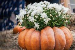 Λουλούδια στη μεγάλη ραβδωτή κολοκύθα Ημέρα των ευχαριστιών και διακόσμηση και έννοια αποκριών εορταστική Φθινόπωρο, ανασκόπηση π Στοκ εικόνες με δικαίωμα ελεύθερης χρήσης