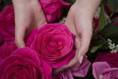 Λουλούδια στη φωτογραφία παραθύρων Στοκ Φωτογραφία