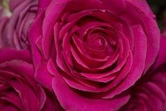 Λουλούδια στη φωτογραφία παραθύρων Στοκ φωτογραφίες με δικαίωμα ελεύθερης χρήσης