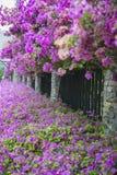 Λουλούδια στις οδούς Pattaya Στοκ φωτογραφία με δικαίωμα ελεύθερης χρήσης